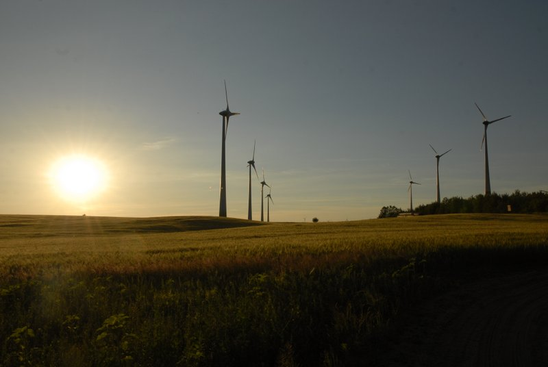 wheat field and wind mill in Loewenberger Land