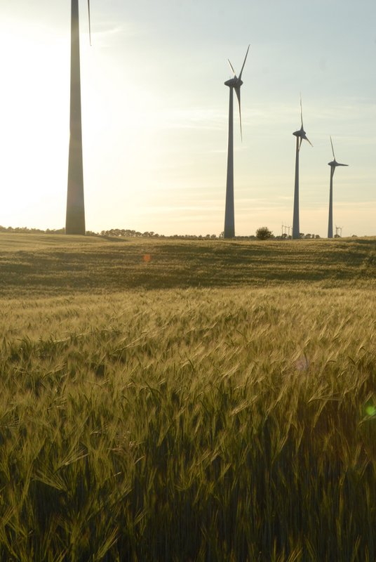 wheat field and wind farm in Loewenberger Land
